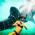Whale_sharks_oslob.JPG