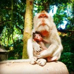 Sacred Monkey Forest Sanctuary, Ubud, Bali, Indonesia, Kuta Sea Turtles, Sacred Monkey Forest,